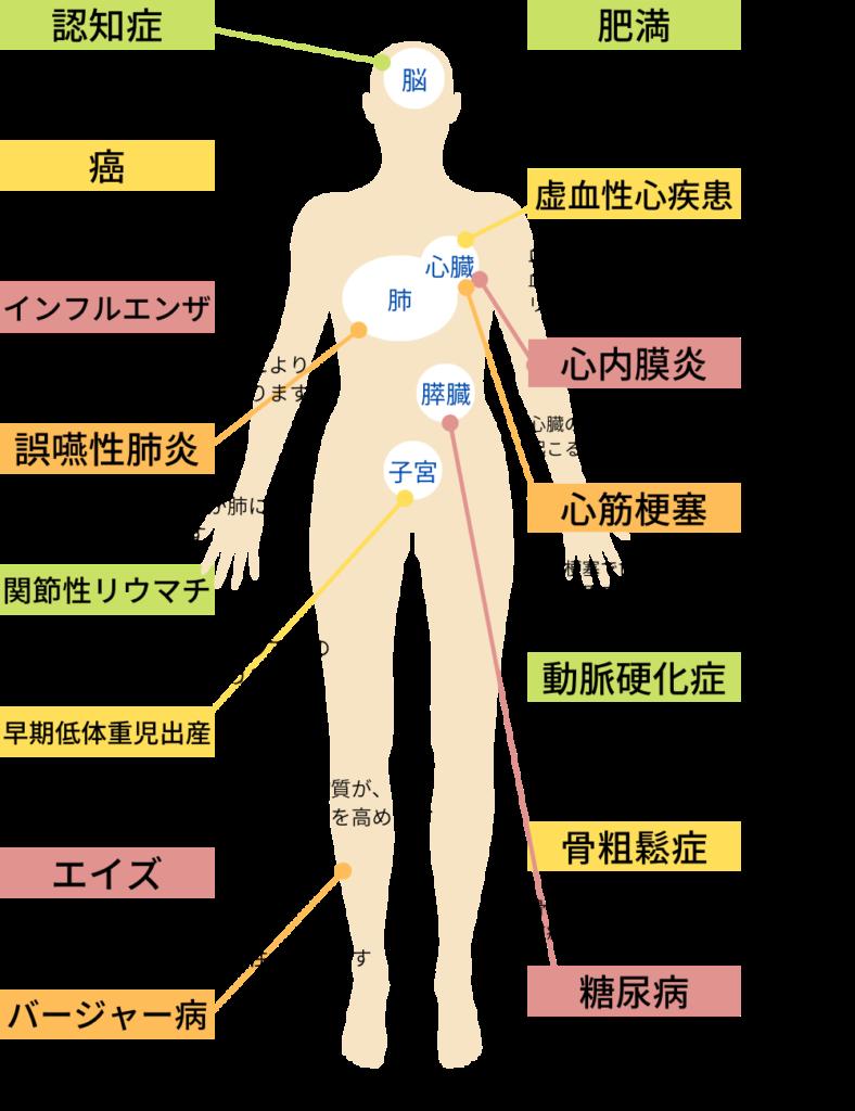 歯周病の身体への影響